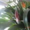 balkonvirágok 8