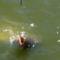 horgászto 110