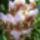 Marie_selby_botanikuskert_florida_576341_56615_t