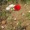 vadvirágok 001