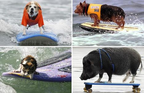 surfing-animals