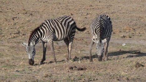 Afrikai szafaritúra 10