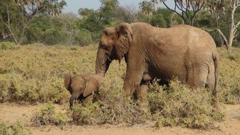 Afrikai szafaritúra 15
