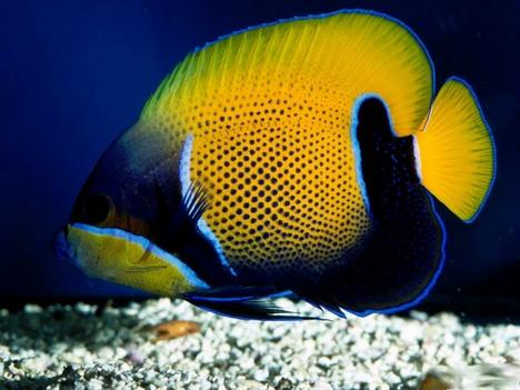 Deep_Sea_3D_-_Fish