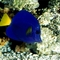 Deep_Sea_3D_-_inhabitants_Coral_reef%2C_fishes