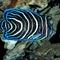 Deep_Sea_3D_-_inhabitants_coral_reef
