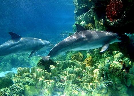 delfin-015