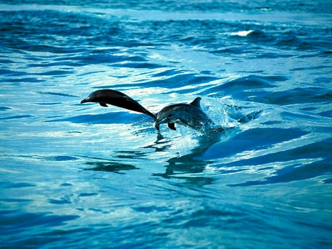 dolphin_1008