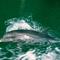 dolphin_1012