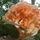 Gönyűi kertek