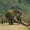 Komoly munkaerő az elefánt szállításnál, építkezésnél