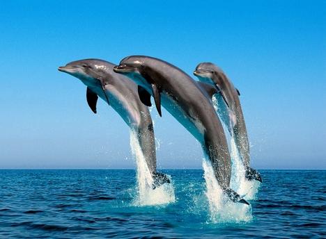 Palackorrú_delfinek