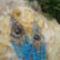 Kék macskaszemek