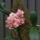 Orchidea kialitas