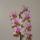orchideák 2010 1