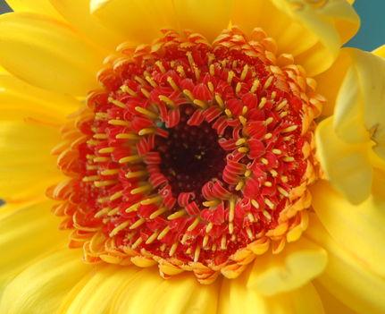 Virágbelső