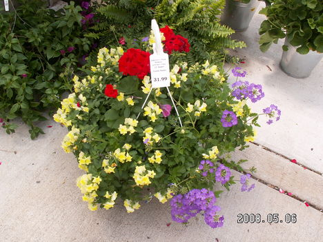 Balkon növény