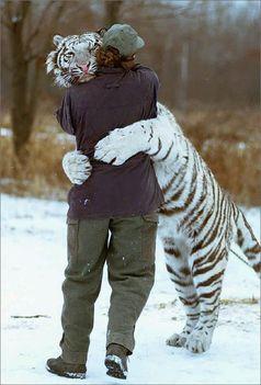 édes tigris