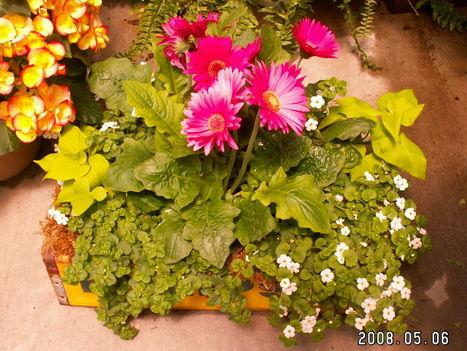 Kertészet 3