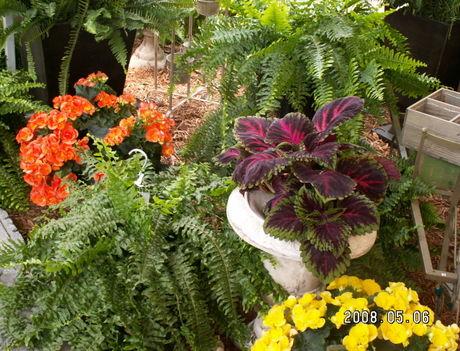 Kertészet 6