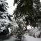 havas tuják, fenyők az udvarban