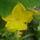 szeretet virágai 3