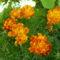 szeretet virágai 4