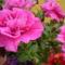 szeretet virágai 7