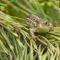 2560Jaszczurka zwinka (Lacerta agilis)