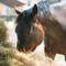 2560Konik - horse