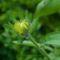 2560Kwiatek - Flower2
