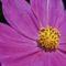2560Kwiatek - Flower3