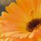 2560Kwiatek - Flower