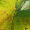 2560Liść - Leaf2