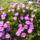 Fabianne Piroska -Horvátország csodás virágai