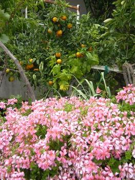 növények, virágok