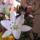 Garáz József kertje