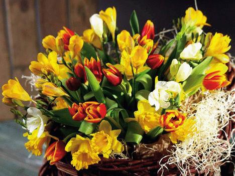 Tavasz-várás....