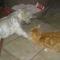 Fricike a talált(2009.ősszel)  cica 11