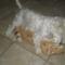 Fricike a talált(2009.ősszel)  cica 12