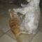 Fricike a talált(2009.ősszel)  cica 13