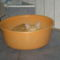 Fricike a talált(2009.ősszel)  cica 15