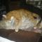 Fricike a talált(2009.ősszel)  cica 19