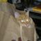 Fricike a talált(2009.ősszel)  cica 1