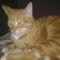 Fricike a talált(2009.ősszel)  cica 20