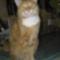 Fricike a talált(2009.ősszel)  cica 2