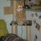 Fricike a talált(2009.ősszel)  cica 3