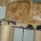 Fricike a talált(2009.ősszel)  cica 4