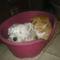 Fricike a talált(2009.ősszel)  cica 6