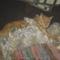 Fricike a talált(2009.ősszel)  cica 7